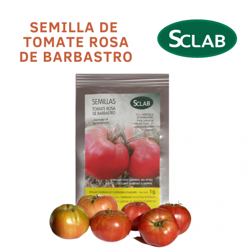 semillas cooperativa barbastro Tomate Rosa de Barbastro