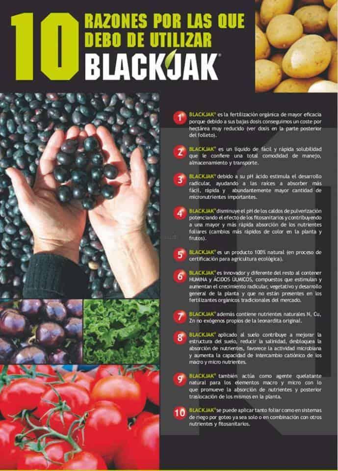 10 razones por las que debo usar blackjak