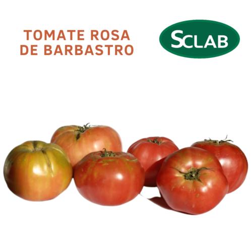 cooperativa barbastro Tomate Rosa de Barbastro