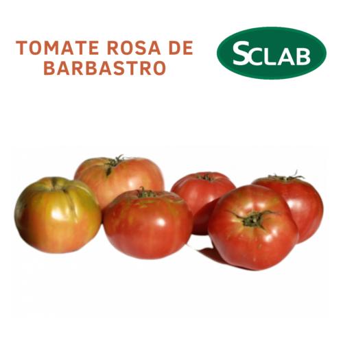 Tomate Rosa Barbastro